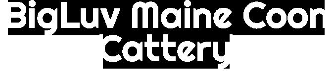 BigLuvMaineCoons Logo